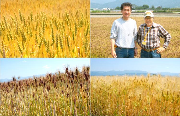麦の生産者さん
