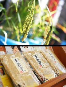 五穀米と稲の写真